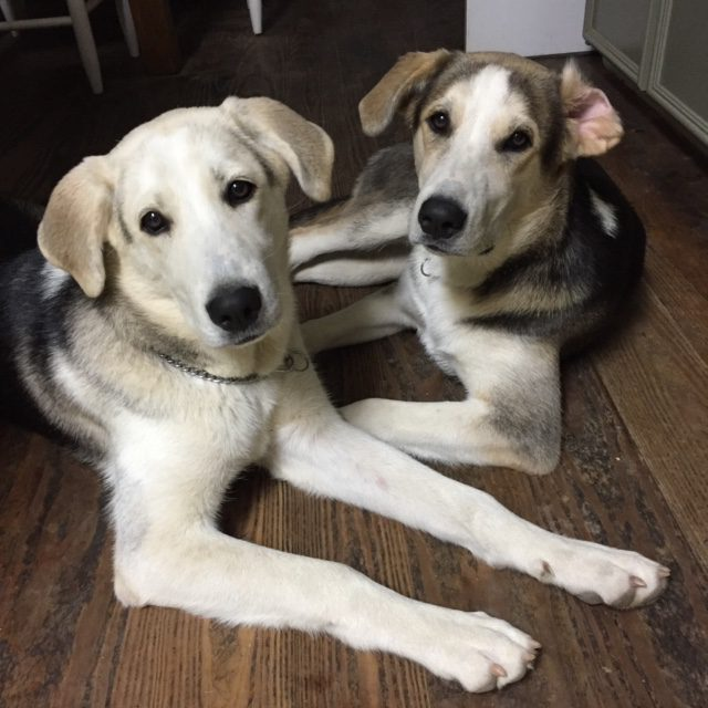 Sadie & Lenny