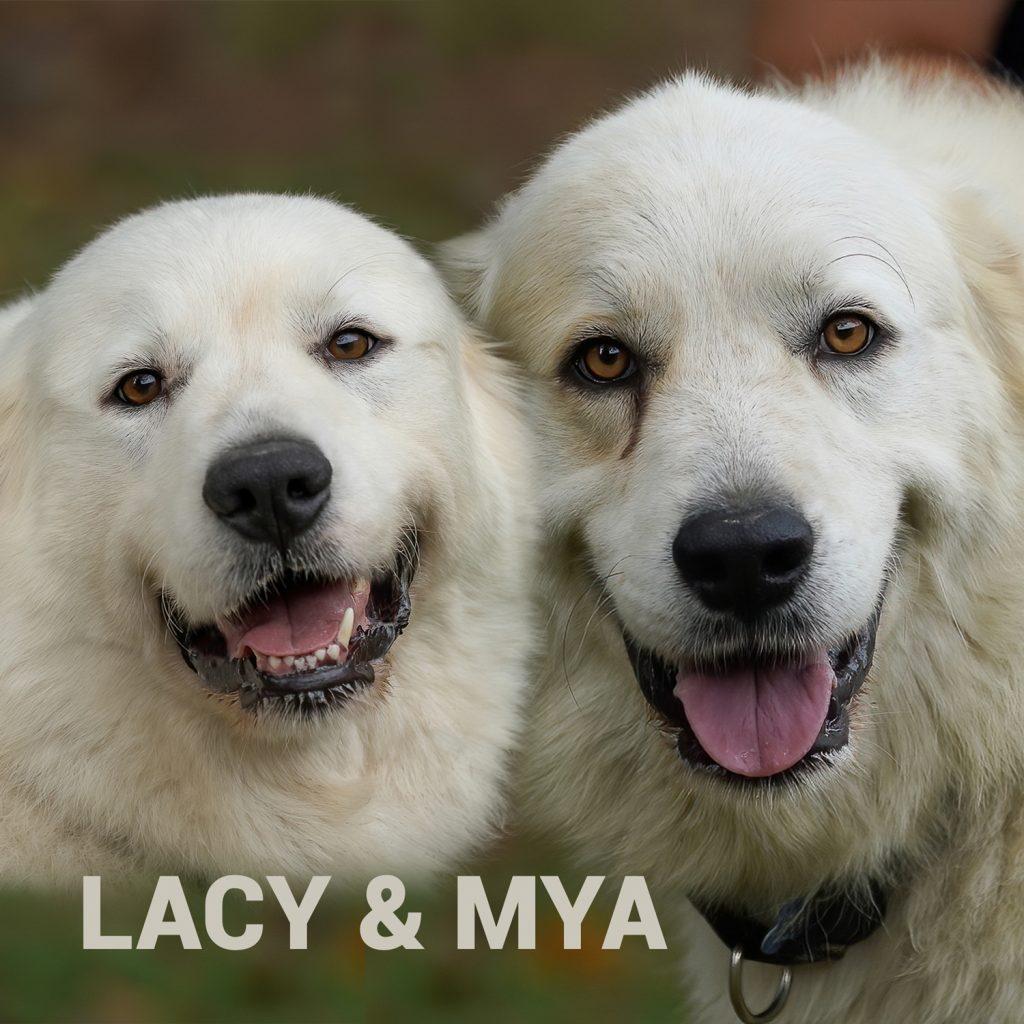 Lacy & Mya